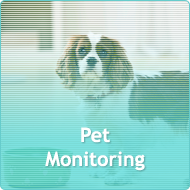 Pet Monitoring